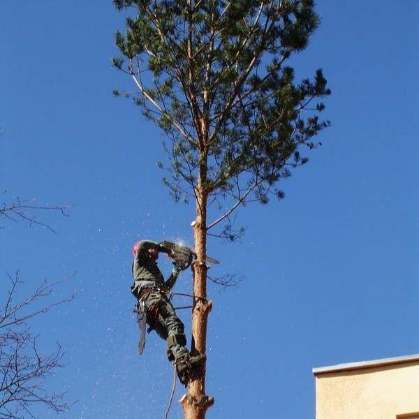 Výrub a orezávanie stromov, údržba zelene